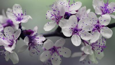 Spring flowering theme of Flowers