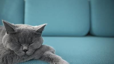 Cat dreams theme of Cats